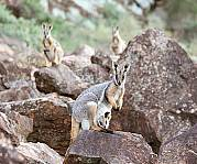 5 Day Flinders Ranges & Outback Inc Arkaroola (4nts Superior Motel Unit - Solo Traveller)