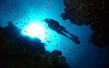 Marine World Cruise & 2 Certified Dives